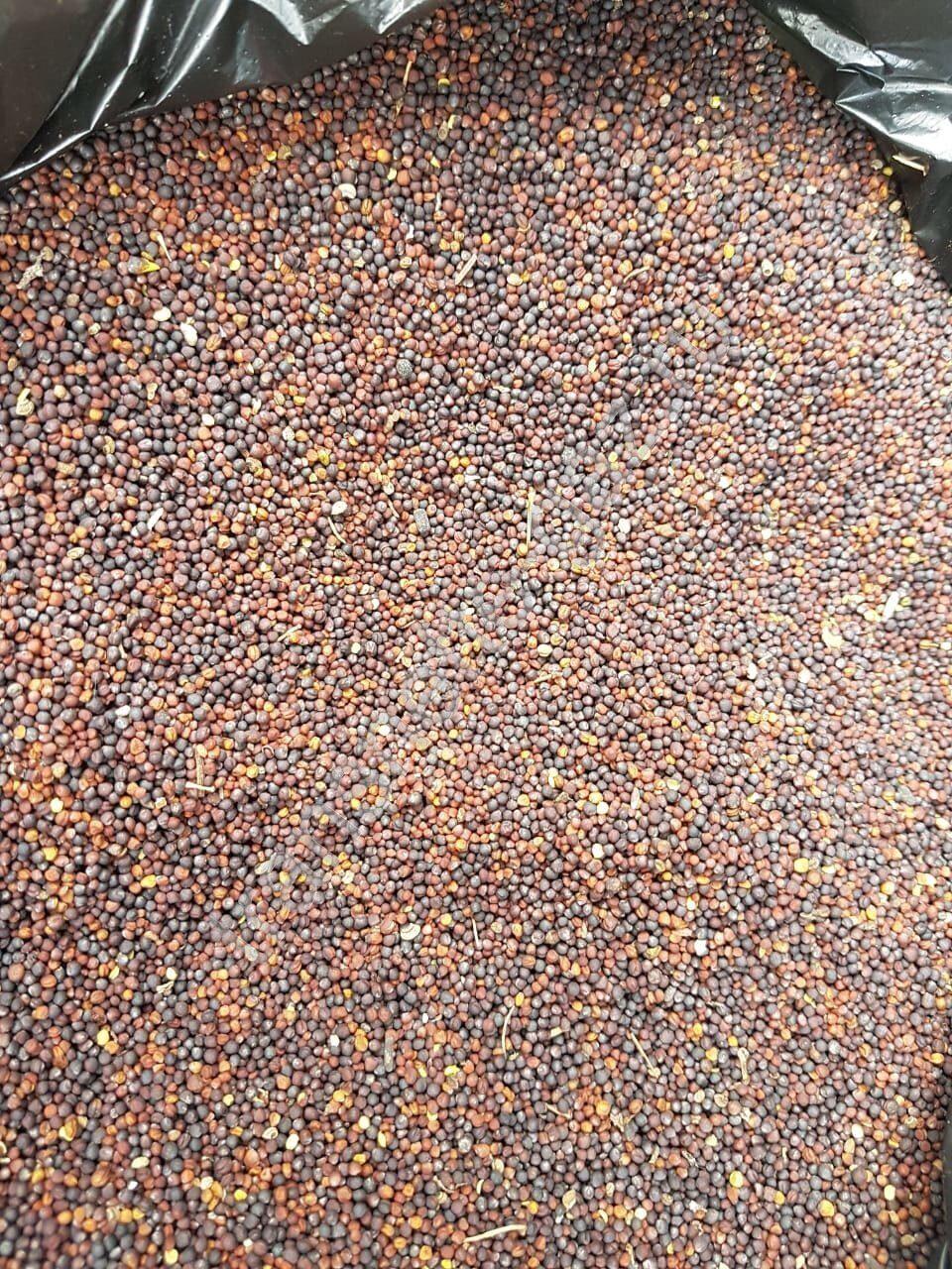 цена зерна на элеваторах тамбовской области
